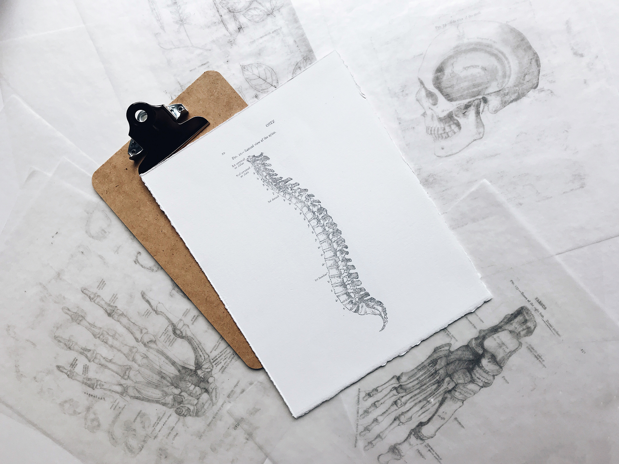 Everything you need to know about chiropractic